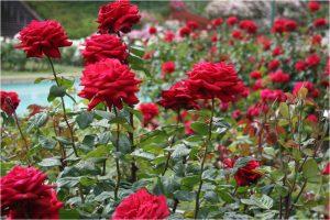 đất sạch trồng hoa